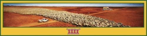 interbrew-sheep-small-51151